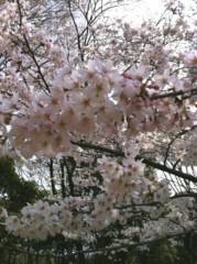 奥山あゆみ 公式ブログ/桜と友情 画像1