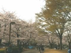 奥山あゆみ 公式ブログ/桜と友情 画像2
