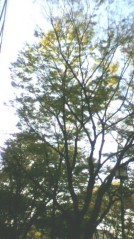 奥山あゆみ 公式ブログ/緑まぶしく(^-^) 画像1