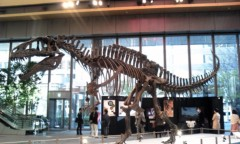 奥山あゆみ 公式ブログ/恐竜さんヾ(≧∇≦) 画像1