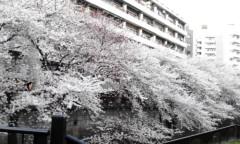 奥山あゆみ 公式ブログ/桜〜♪ 画像1