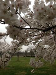 Cris プライベート画像/景色 Sakura