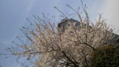 井上あかね 公式ブログ/春ですね 画像1