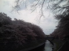 佐藤太三夫 公式ブログ/まだまだ咲いていて 画像2