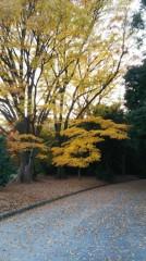 佐藤太三夫 公式ブログ/綺麗と黄色です。 画像1