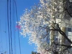 佐藤太三夫 公式ブログ/桜たくさん 画像1