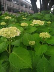 佐藤太三夫 公式ブログ/雨の紫陽花 画像3