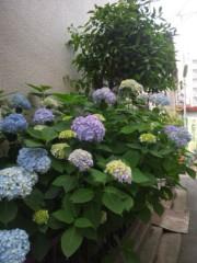 佐藤太三夫 公式ブログ/咲いてました。 画像2
