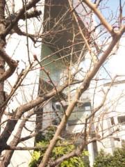 佐藤太三夫 公式ブログ/新歌舞伎座の梅 画像1