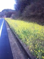 佐藤太三夫 公式ブログ/千葉 菜の花 画像1