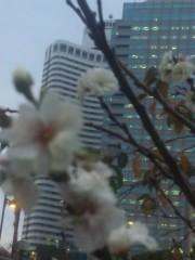 佐藤太三夫 公式ブログ/冬桜 画像2