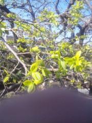 佐藤太三夫 公式ブログ/柿の木です。 画像1