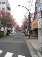 佐藤太三夫 公式ブログ/八重桜 画像1