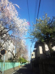 佐藤太三夫 公式ブログ/桜たくさん 画像2