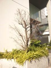 佐藤太三夫 公式ブログ/新歌舞伎座の梅 画像2