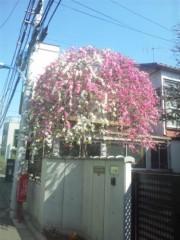 佐藤太三夫 公式ブログ/家の近くの桜はもう一本 画像2