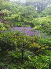 佐藤太三夫 公式ブログ/根津美術館 杜若 画像1