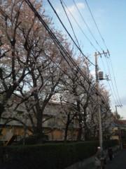 佐藤太三夫 公式ブログ/桜並木 画像1
