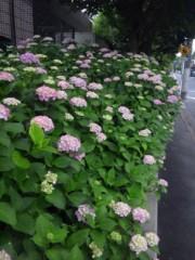 佐藤太三夫 公式ブログ/色づいた 紫陽花 画像2