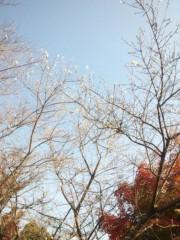 佐藤太三夫 公式ブログ/四季桜 画像2