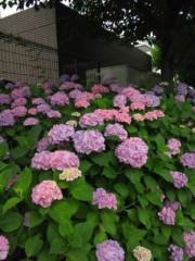 佐藤太三夫 公式ブログ/伸びた 画像1