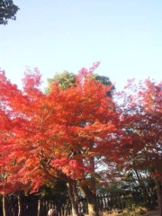 佐藤太三夫 公式ブログ/紅葉 画像2