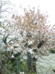 佐藤太三夫 公式ブログ/玄関開けたら 画像1
