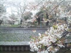 佐藤太三夫 公式ブログ/まだまだ咲いていて 画像3