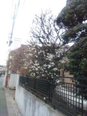 佐藤太三夫 公式ブログ/梅だ 画像3