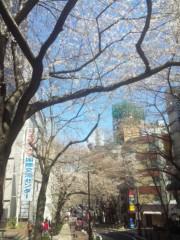 佐藤太三夫 公式ブログ/渋谷にある、桜通り 画像2