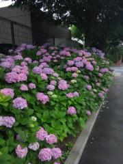 佐藤太三夫 公式ブログ/色濃くなって 画像3