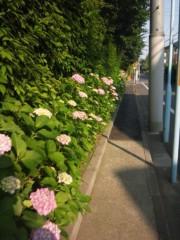 佐藤太三夫 公式ブログ/紫陽花 画像2