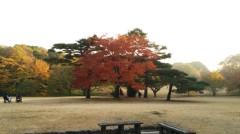 佐藤太三夫 公式ブログ/綺麗に色付いてます 画像2
