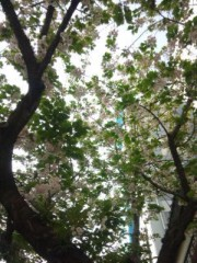 佐藤太三夫 公式ブログ/甘酒横丁 画像2