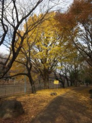 佐藤太三夫 公式ブログ/銀杏 画像3