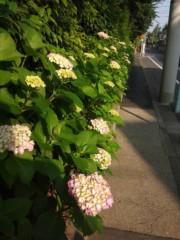 佐藤太三夫 公式ブログ/ 凄い 伸びてる 紫陽花 画像1