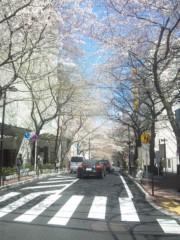 佐藤太三夫 公式ブログ/渋谷にある、桜通り 画像1