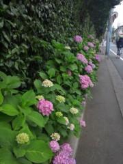 佐藤太三夫 公式ブログ/色濃くなって 画像2