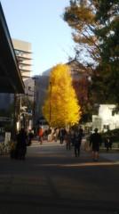 佐藤太三夫 公式ブログ/九段下の交差点の銀杏の木 画像1