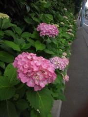 佐藤太三夫 公式ブログ/色づいた 紫陽花 画像1