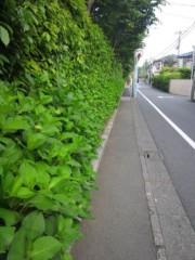 佐藤太三夫 公式ブログ/今年も紫陽花 画像2