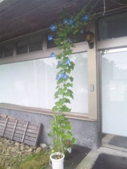 佐藤太三夫 公式ブログ/朝顔です 画像2