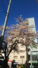 佐藤太三夫 公式ブログ/水天宮の通りは桜が満開 画像1