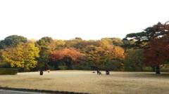 佐藤太三夫 公式ブログ/綺麗に色付いてます 画像1