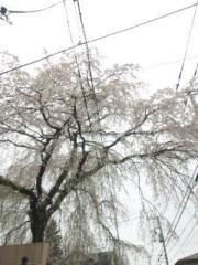 佐藤太三夫 公式ブログ/垂れ桜 画像3