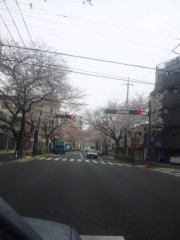 佐藤太三夫 公式ブログ/中野 桜 3 画像2