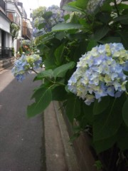佐藤太三夫 公式ブログ/咲いてました。 画像3