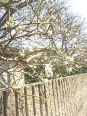 佐藤太三夫 公式ブログ/天気がいいからまた少し 画像1