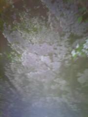 佐藤太三夫 公式ブログ/夜桜 画像2