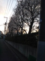 佐藤太三夫 公式ブログ/桜並木 画像2